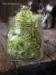 (FREE) Clover Seed Sprouts – Jar method