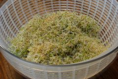 Gently place sprouts in salad spinner