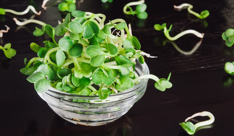 Nouveau Raw - grow your own clover seed sprouts