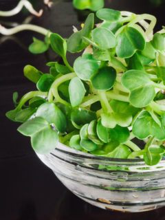 Raw Food Diet - grow clover seed sprouts