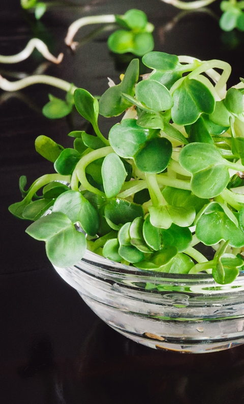 Raw food diet - organic clover seed sprouts