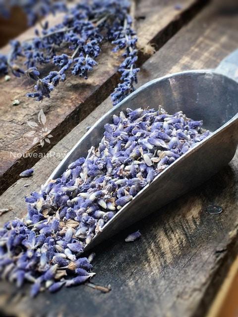 Lavender--1