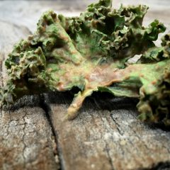raw-gingerbread-kale-chips2