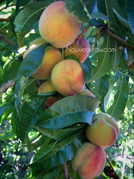 peaches11