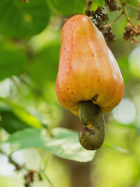 Raw cashews and how to use them in raw vegan recipes