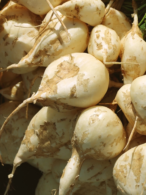 how to grow, use, and cook with jicama
