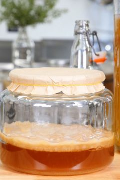 growing-your-own-SCOBY-f